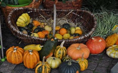 Herbstfest Korschenbroich – mocotel war auch 2017 dabei
