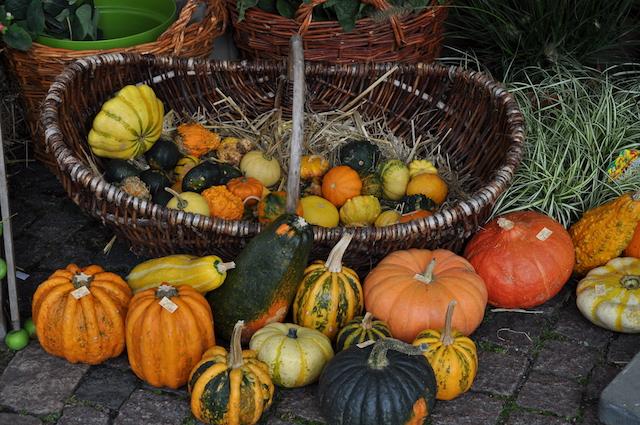 Herbstfest Korschenbroich - mocotel war auch 2017 dabei